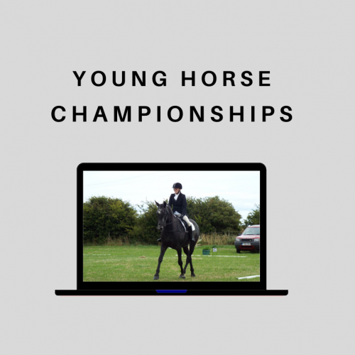 Young Horse Championships